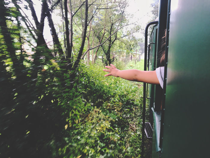 Hand outside train window Child Childhood Day Green Color Hand Human Hand Land Land Vehicle Lifestyles Men Mode Of Transportation Nature One Person Outdoors Plant Real People Train Transportation Travel Tree