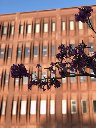 Flowers and a blurred building EyeEm Selects Building Exterior Architecture Built Structure Nature Plant Low Angle View Building No People Window Day Focus On Foreground Outdoors City Flower Flowering Plant Close-up Growth Sky Metal Sunlight
