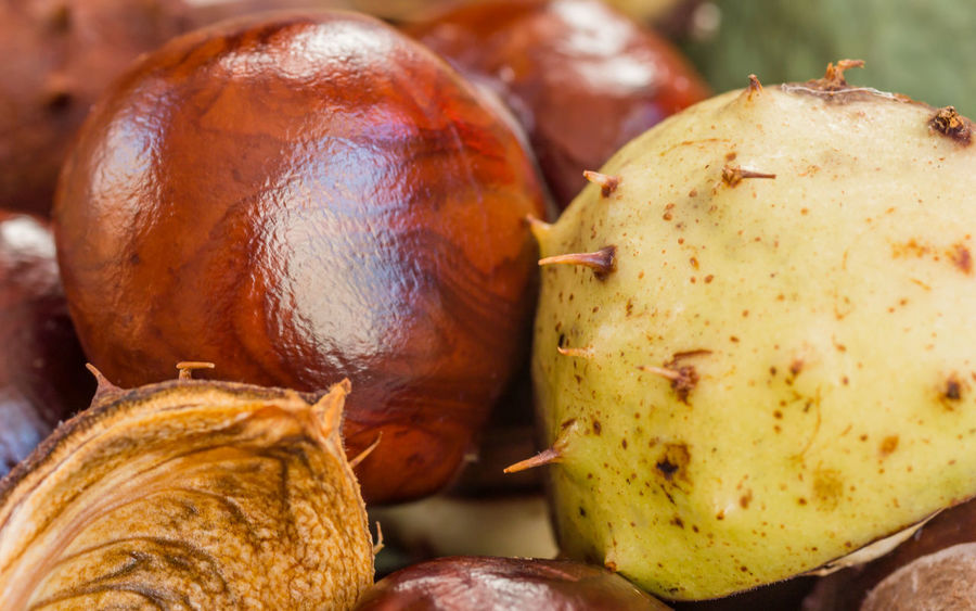 Autumn Chestnut Chestnuts Freshness Background Backgrounds Buckeyes Castanea Close-up Closeup Conkers Fall Fruit Macro Structure