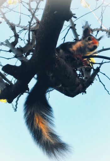 Caught climbing Squirrel One Animal Branches Tangle Outdoors