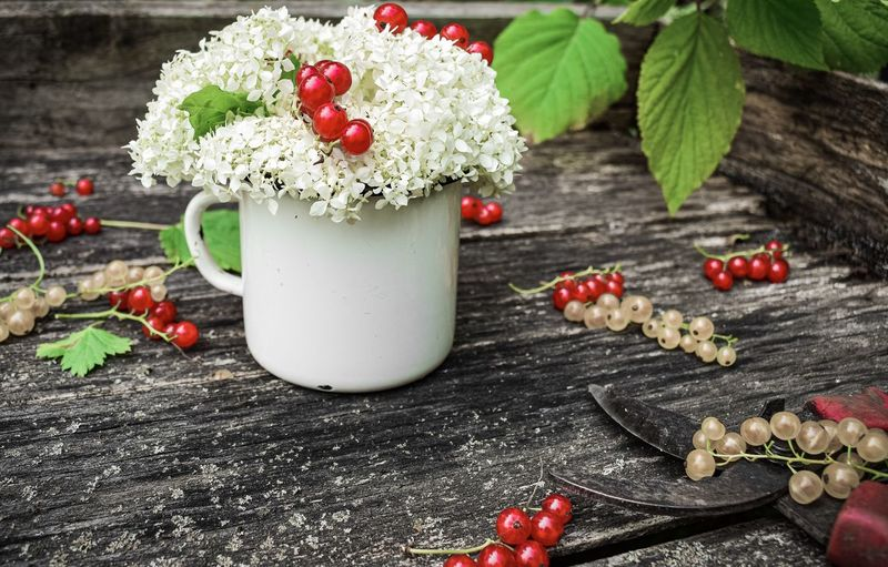 Red currant on