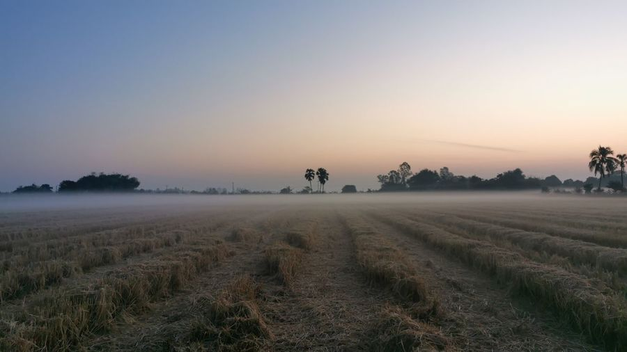 Scenic view of agricultural field against sky during foggy weather