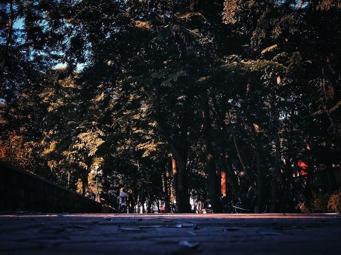 Nature Autumn Autumn🍁🍁🍁 Hanoi Hanoian Hanoi City Autumn Trees Autumn Colors First Eyeem Photo
