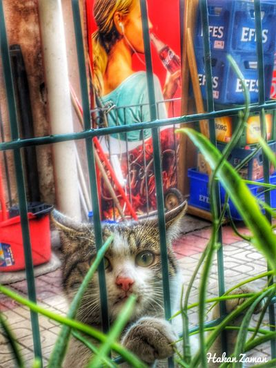Cat kedi Animal Themes Domestic Cat Multi Colored One Animal Pets Looking At Camera Portrait Domestic Animals Mammal No People Feline Cage Indoors  Day