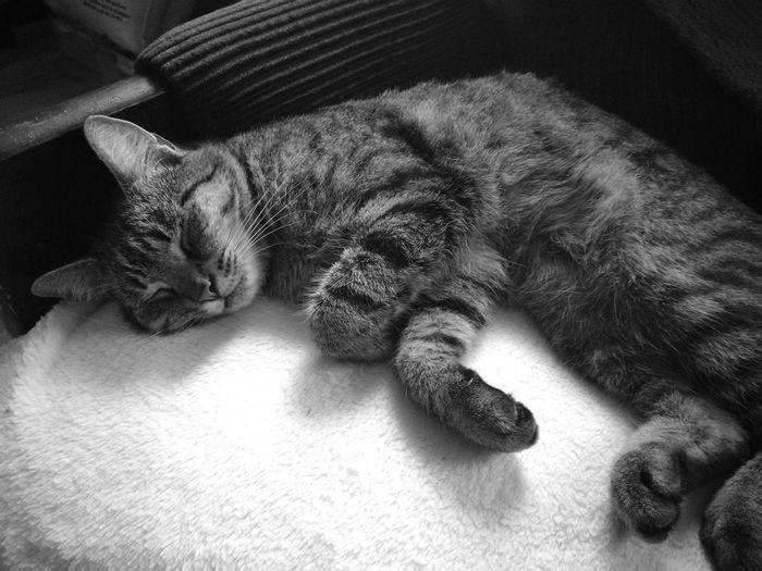 Cat Photography Taking Photos NewPhone Beautifulpicture :) First Eyeem Photo