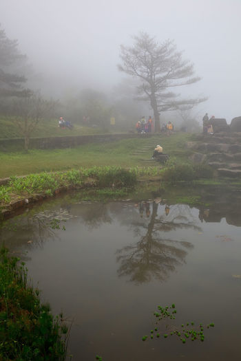 Fog Water Plant Tranquility Tree Reflection Beauty In Nature Tranquil Scene Nature Scenics - Nature Lake Sky No People Day Landscape Non-urban Scene Idyllic Grass Outdoors Hazy