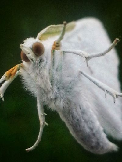 Looking at me from the window... Big Eyes On My Window Green Tint Furry White Moth Moth Underbelly Insect Insect Paparazzi Pets Tail Close-up Animal Hair Animal Face Wild Animal Butterfly Butterfly - Insect Bug