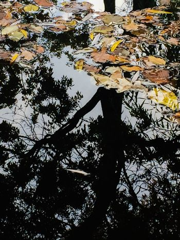 Leaf Water Reflection Autumn Nature Tree Outdoors Change No People Lake Day Tranquility Floating On Water Beauty In Nature Close-up Perspectives On Nature