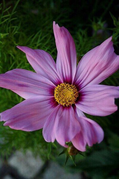 Schmuckkörbchen ...🌺💕😊 Blumenpracht🌺🍃 Blümchen Für Euch Blümchenliebe Summertime ♥ Itsabeautifulworld StillLifePhotography Lovely Garten Pflanze Natur Naturelovers