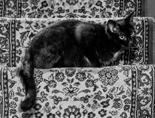 Gracie on the status Monochrome Photography FUJIFILM X-T2 Black And White Cats Of EyeEm Cat Cats Feline Monochrome FUJIFILMXT2 Cats 🐱