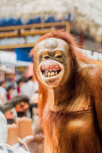 Close-up portrait of smiling monkey