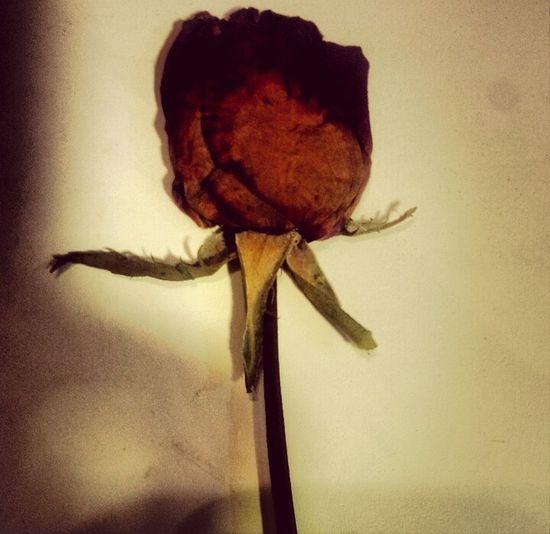 MyLove❤ Mi Manchi❤Voglio Tornare Indietro Sei La Mia Vita ❤ Torna Da Me la prima rosa...