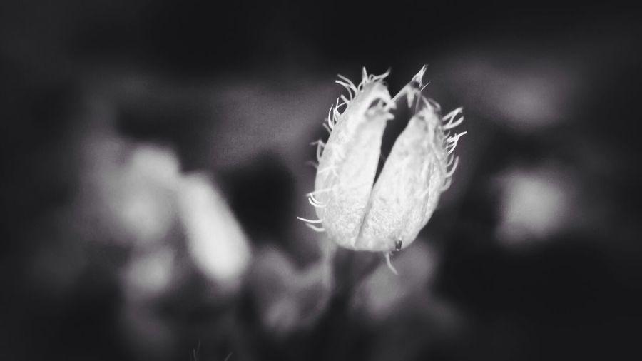 Black & White Monochrome EyeEm Nature Lover Black And White