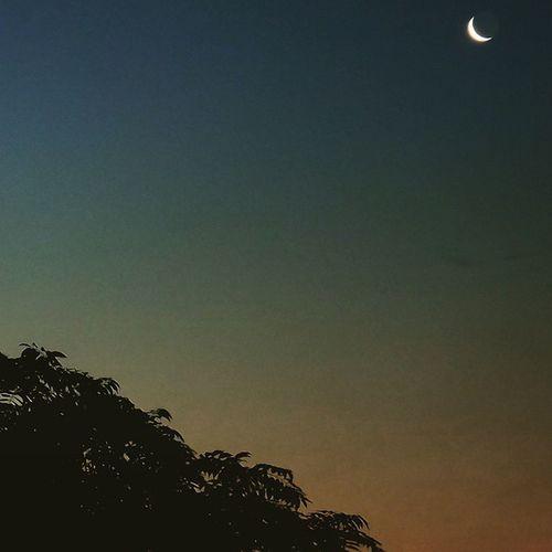 Moon Moonshine Moonset Moonshot MoonScape Moonshots  Moonstagram Moonlights Space Instanature Lovethemoon Craters Phases  Moonphases Tree TreePorn Trees Treeshunter Treescollection Treepic Beautiful Treezer Treenity Treelover  Ic_trees treestagram ic_trees_bare treesrock treesplease ig_hun