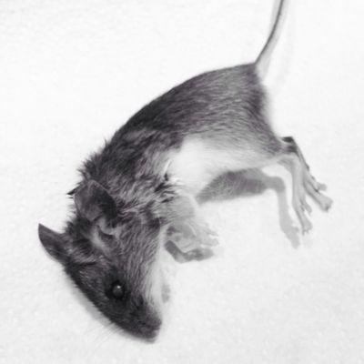 It's a cat eats mouse world.