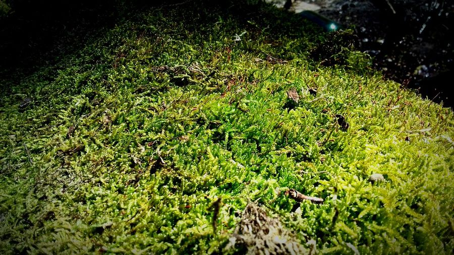 Green Color Grass Nature No People Beauty In Nature Day Freshness First Eyeem Photo