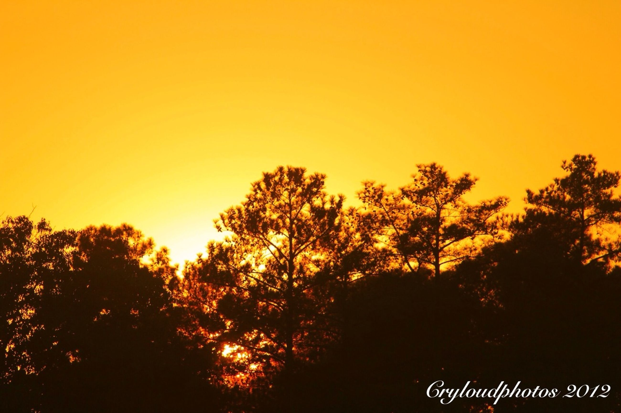 sunset, tree, orange color, silhouette, beauty in nature, clear sky, tranquility, tranquil scene, scenics, nature, copy space, growth, idyllic, outdoors, no people, forest, yellow, non-urban scene, landscape, sky