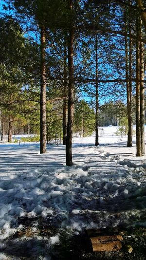 Tree Beauty In Nature Nature No People Growth Cold Temperature Outdoors