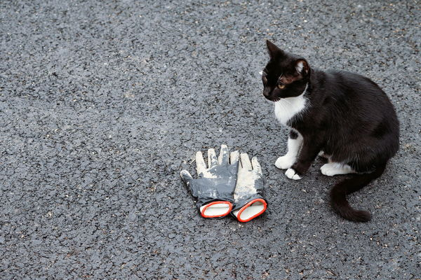 The guardian. Guardian Guarding Asphalt Gloves No People Pets Domestic Cat High Angle View Cat Stray Animal Feline