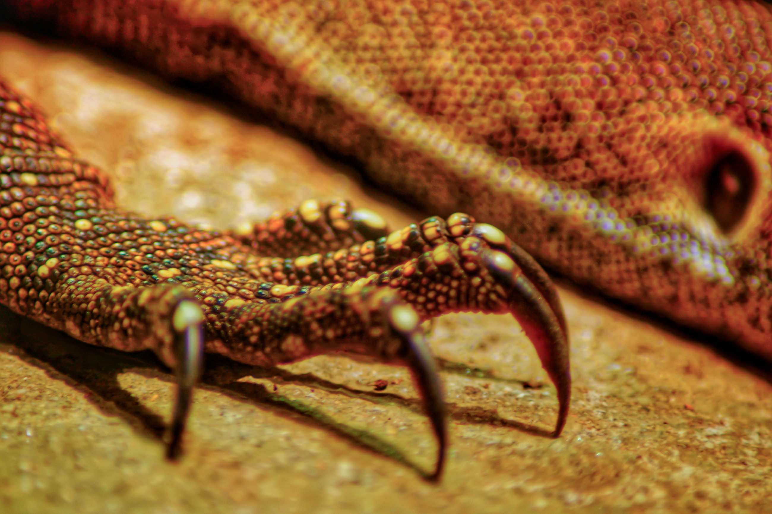 animal themes, animals in the wild, wildlife, one animal, lizard, reptile, selective focus, insect, zoology, close-up, arthropod, snake, animal wildlife, animal eye, gecko, green color, nature, invertebrate