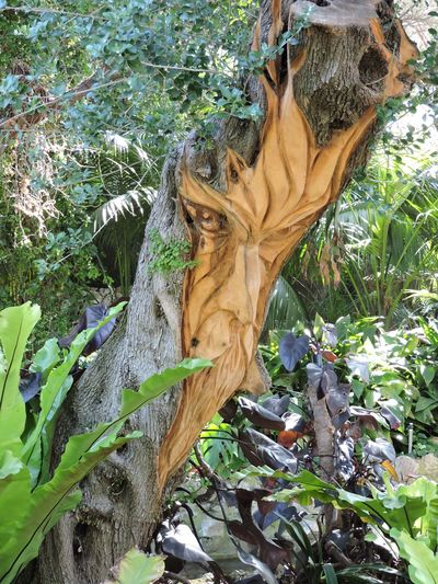 ArtWork Botanical Gardens Carved Face. Carving Carving In Wood Day Face Gibraltar Growth No People Outdoors Tree Tree Tree Trunk