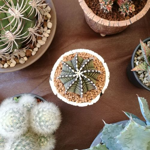 High angle view of cactus