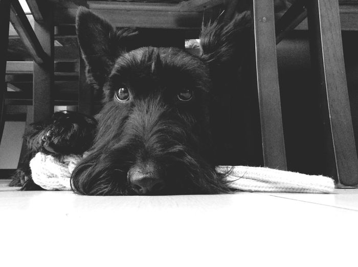 My Dog I Love My Dog Black And White