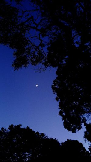 Hanging Out Taking Photos Naturerox San Francisco Summertime Treethugger MoonScape Moon Nightphotography