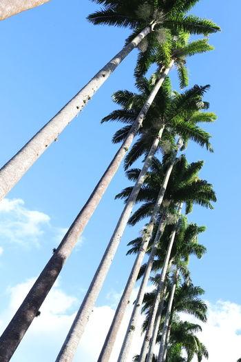 tree palms line