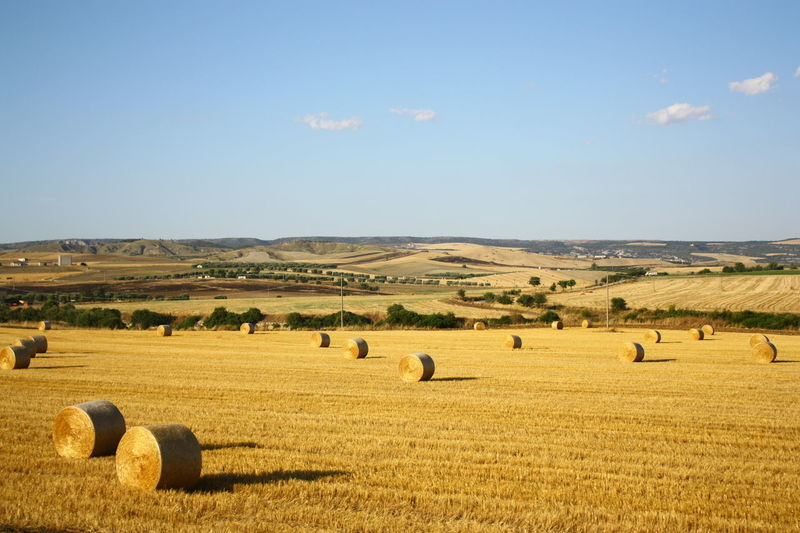 Hay bales on field during sunny day