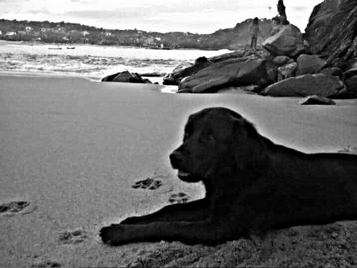 🐶⚓홋 ~ Sea Ocean Nature Photography Animal Photography Perro Dog Relaxing Alone Company New_friend