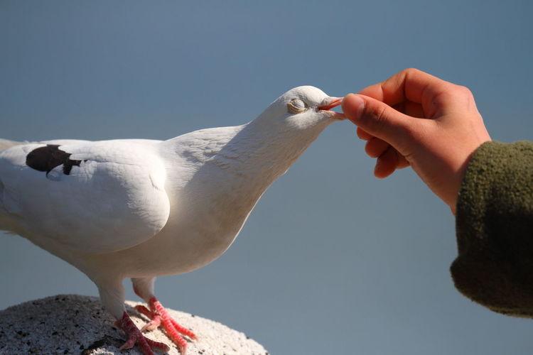 Hand feeding a bird against clear sky