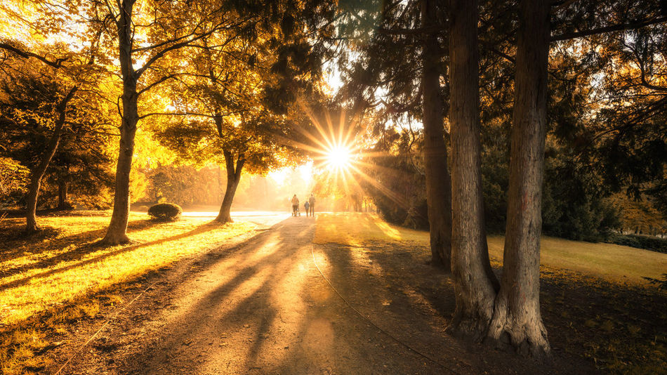 Autumn Autumn colors Autumn Leaves Beauty In Nature Forest Growth Land Leisure Activity Lens Flare Lifestyles Nature Outdoors Plant Real People Shadow Sun Sunbeam Sunlight Sunset Tranquil Scene Tranquility Tree Tree Trunk Trunk