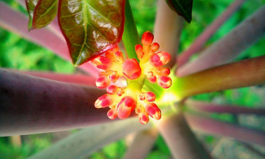something about it .. Macro Photography Life In Colors Color Explosion Take A Shot Nature Photography Eyeem Philippines