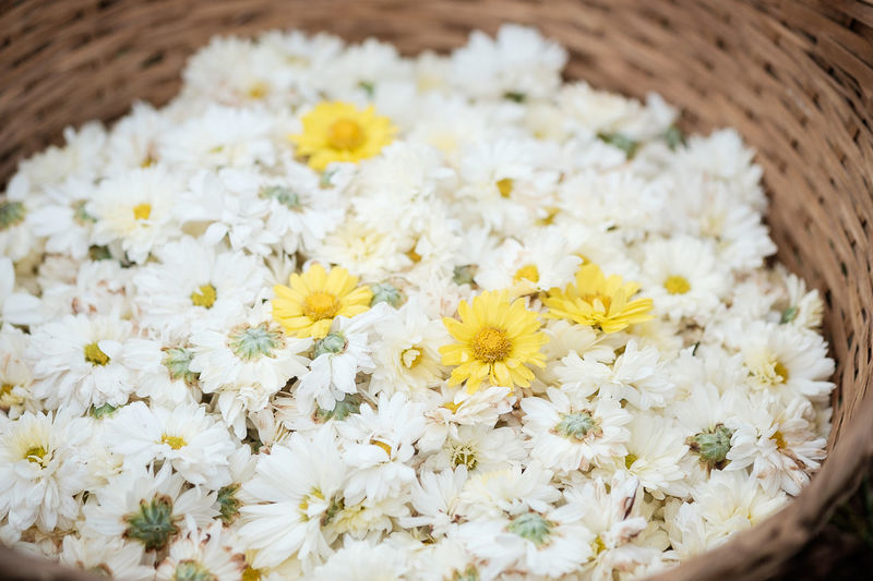 Close-up of white daisy flowers in basket