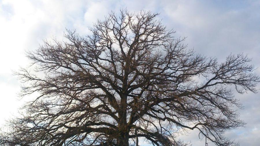 Reaching for the sky Tree Sky Streamzoofamily Phone