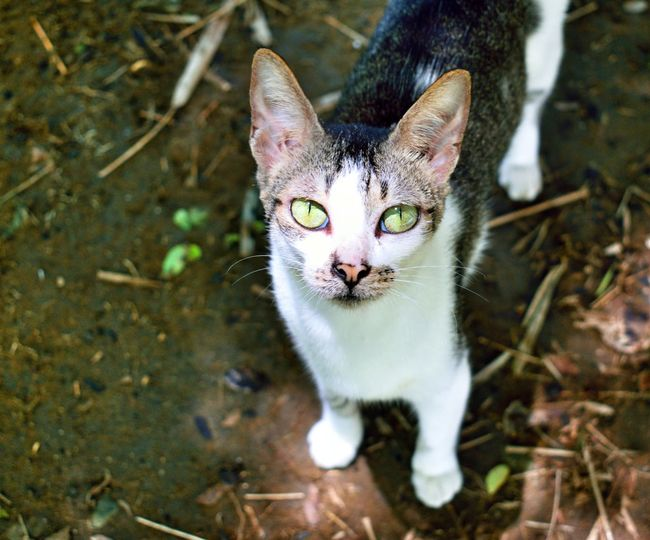 Pets Cats Cats Of EyeEm Bekindtoanimals EyEmNewHere Pet Portraits
