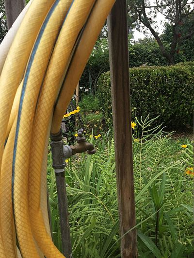Yellow Hose Garden Hose Water Spigot Farm Life Yellow Wildflower Yellow