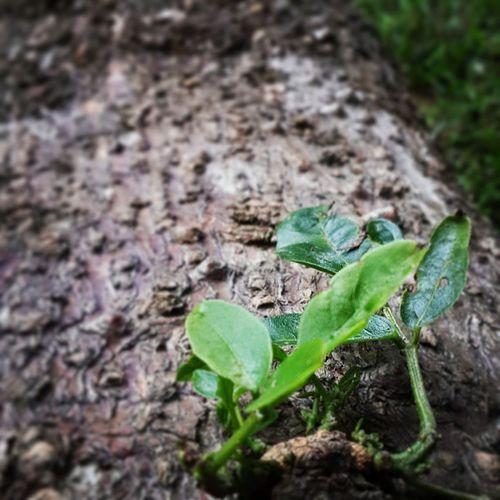 Leaf Onalog Instashot Instagood tagforlikes instashare