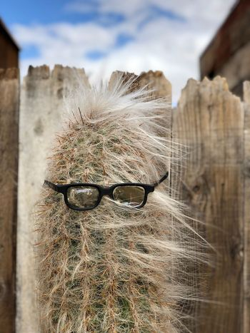Cactus with sunglasses Humor In Nature Sunglasses Cactus Day Close-up Outdoors Focus On Foreground Architecture Sky California Dreamin No People