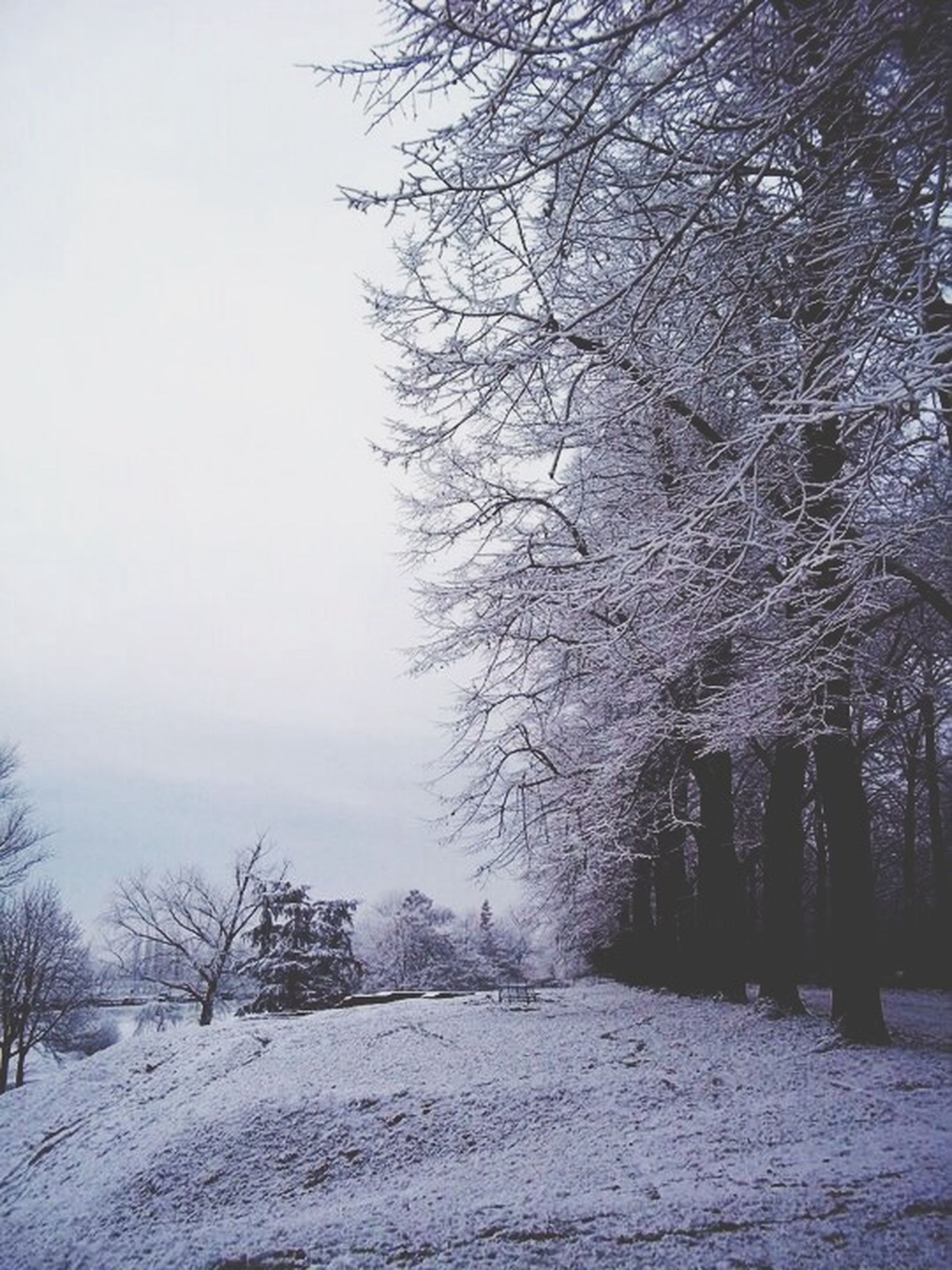 snow, winter, cold temperature, tree, tranquility, tranquil scene, weather, season, nature, the way forward, beauty in nature, bare tree, scenics, landscape, sky, covering, branch, non-urban scene, field, day
