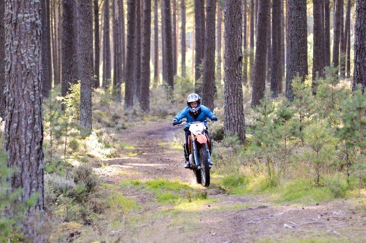 Adventure Forest Tree One Person WoodLand Pine Tree Lifestyles Biker Motorcycle WoodLand Riding Transportation