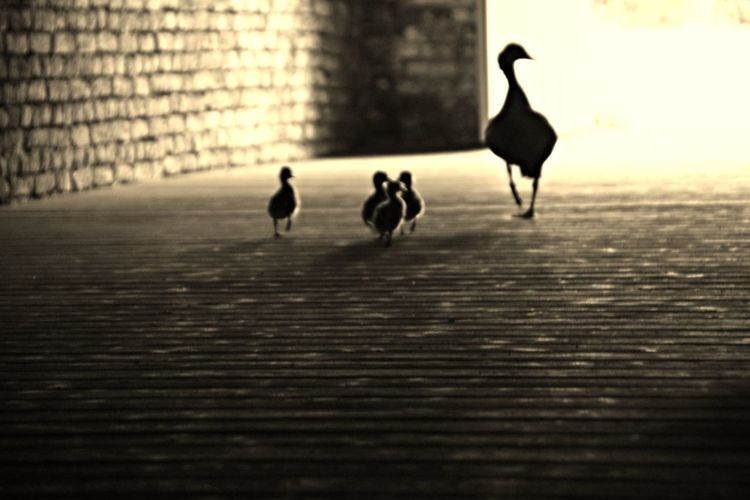 Family walk Hanging Out Taking Photos Hello World Relaxing Walking Around Enjoying Life Light And Shadow Momochrome B&w Nature Nature On The Door Step Life Is Beautiful EyeEm Gallery Naturelovers Nature_collection Hanging Out EyeEm Best Shots - Nature Snapshots Of Life Ducks