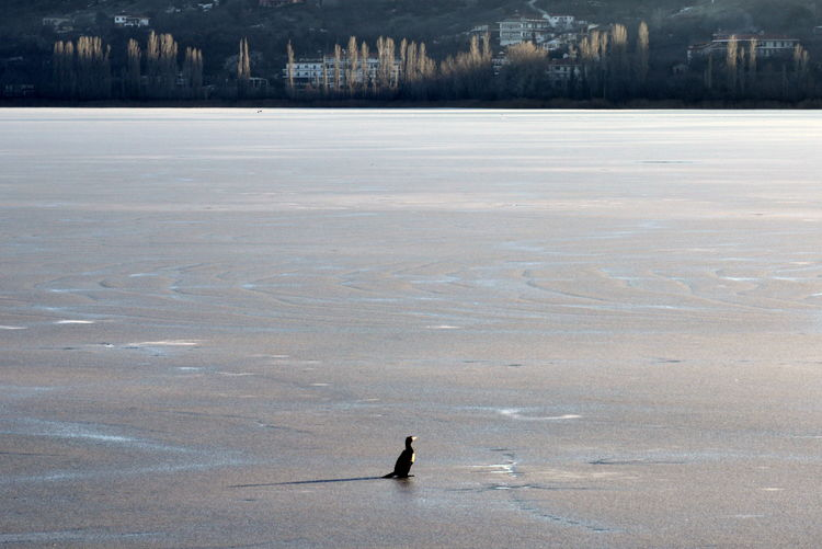 View of birds on frozen lake