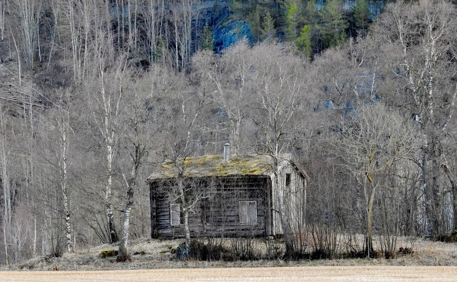 Decay Remote Location Rotting Away Rural Decay Rural Scenes Abandon_seekers Abandoned Abandoned Buildings Architecture Bare Tree Branch Building Exterior Built Structure Day Field Landscape Nature Old House Abandoned Old Houses Outdoors Remote Rotting Rural Scene Tree