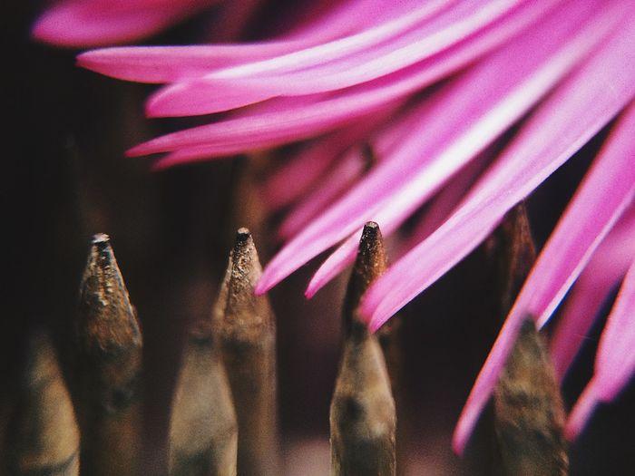 ✨✨ Pink Color