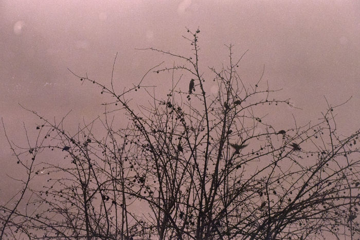 Analogue Photography Bare Tree Beauty In Nature Birds Branch Caffenol Day Expired Film Film Iso 400 Low Angle View Nature No People Outdoors Silhouette Sky Sunset Tree