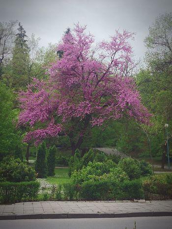 Spring Springtime Spring2016🌾