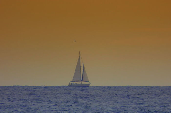 Sailboat In Sunset Beauty In Nature Boat Clear Sky Day Horizon Over Water Mast Nature Nautical Vessel No People Outdoors Sailboat Sailing Scenics Sea Sky Sunset Tranquility Transportation Water Waterfront Yacht