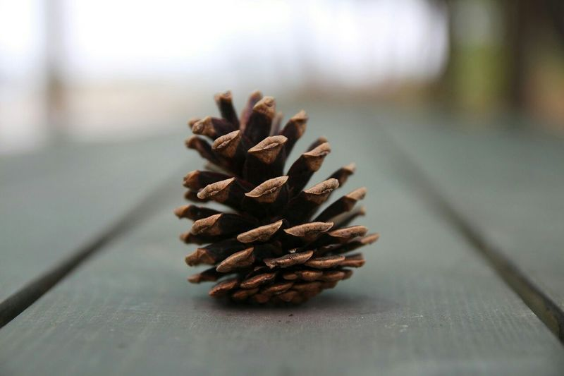 Cone Tree Taking Photos Hanging Out Macro Light And Shadow Check This Out Macro Beauty